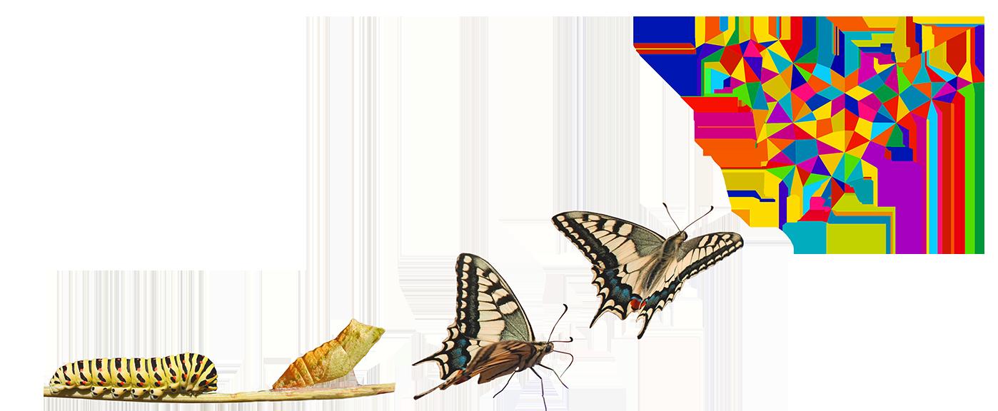 speexx-hr-butterfly