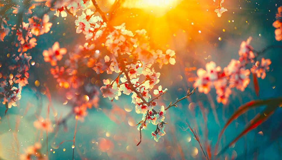 english, inglese, primavera, spring